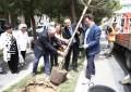 Pescara: dopo le polemiche, si ripiantano pini sani