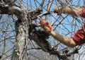 Pescara, vertice sugli alberi tagliati e da tagliare