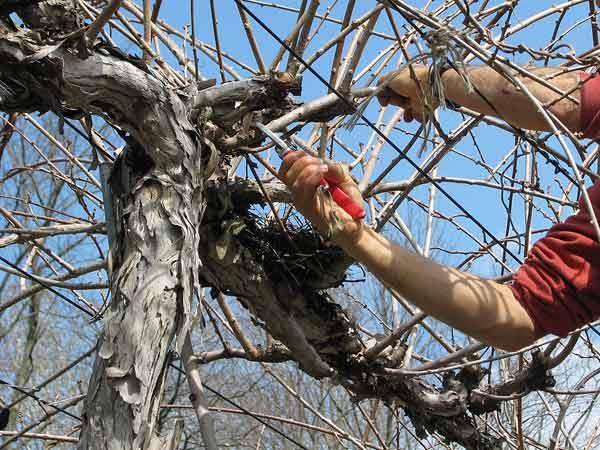Civitaquana: 63enne cade dalla scala mentre pota alberi