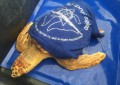 Pescara: rilasciate al largo 7 tartarughe