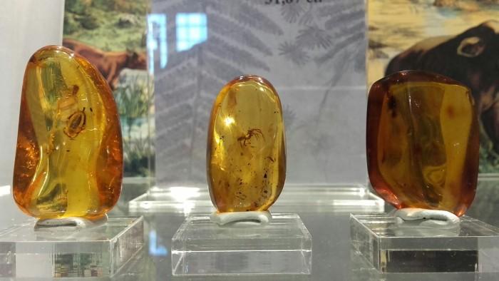 A San Valentino in Abruzzo Citeriore nasce il primo museo delle ambre d'Italia