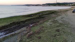 Alghe oggi a Pescara