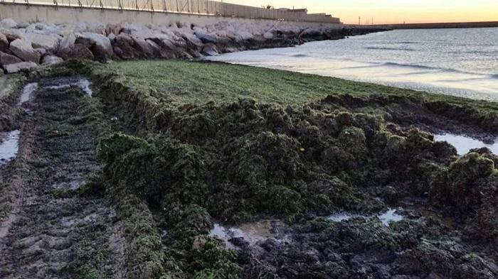 Pescara: Attiva, tonnellate di alghe rimosse da spiaggia
