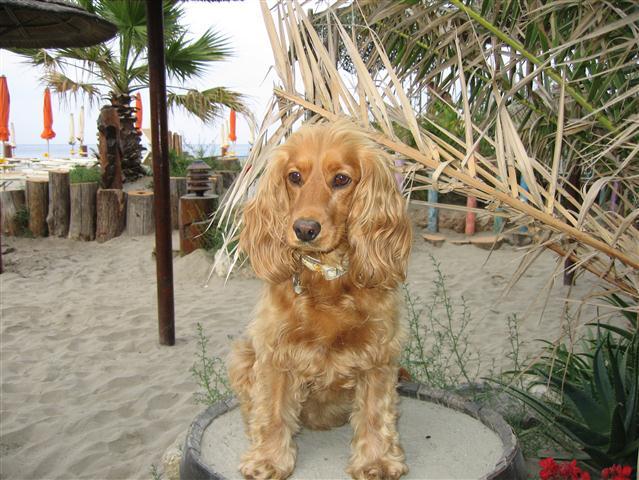 """A Silvi in spiaggia con """"Fido"""""""