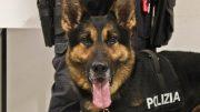 cane-poliziotto1