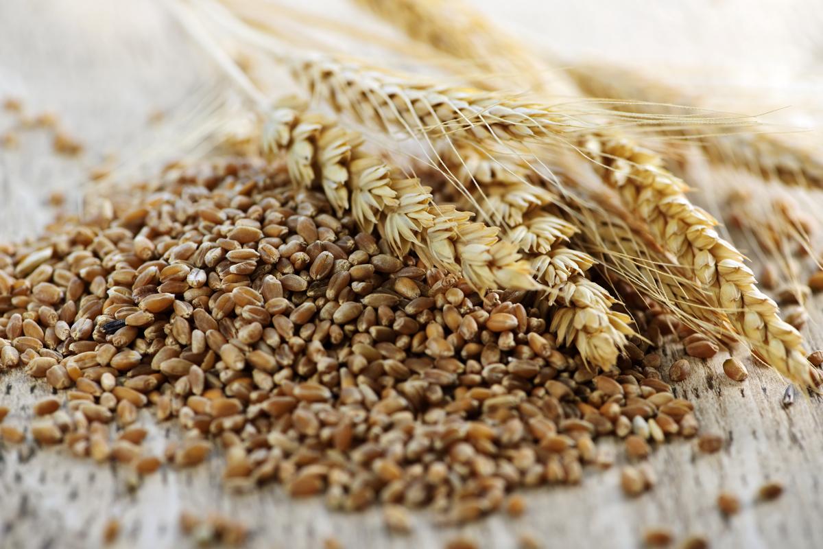 Copagri Abruzzo: i prezzi dei cereali in caduta libera