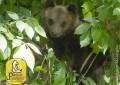 Pnalm: l'orsetta Morena non è stata uccisa