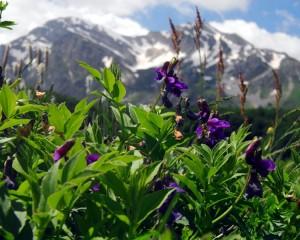 Biodiversità Abruzzo, tra record e infrazioni