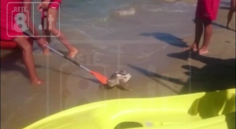 Tartaruga trovata morta a Pescara