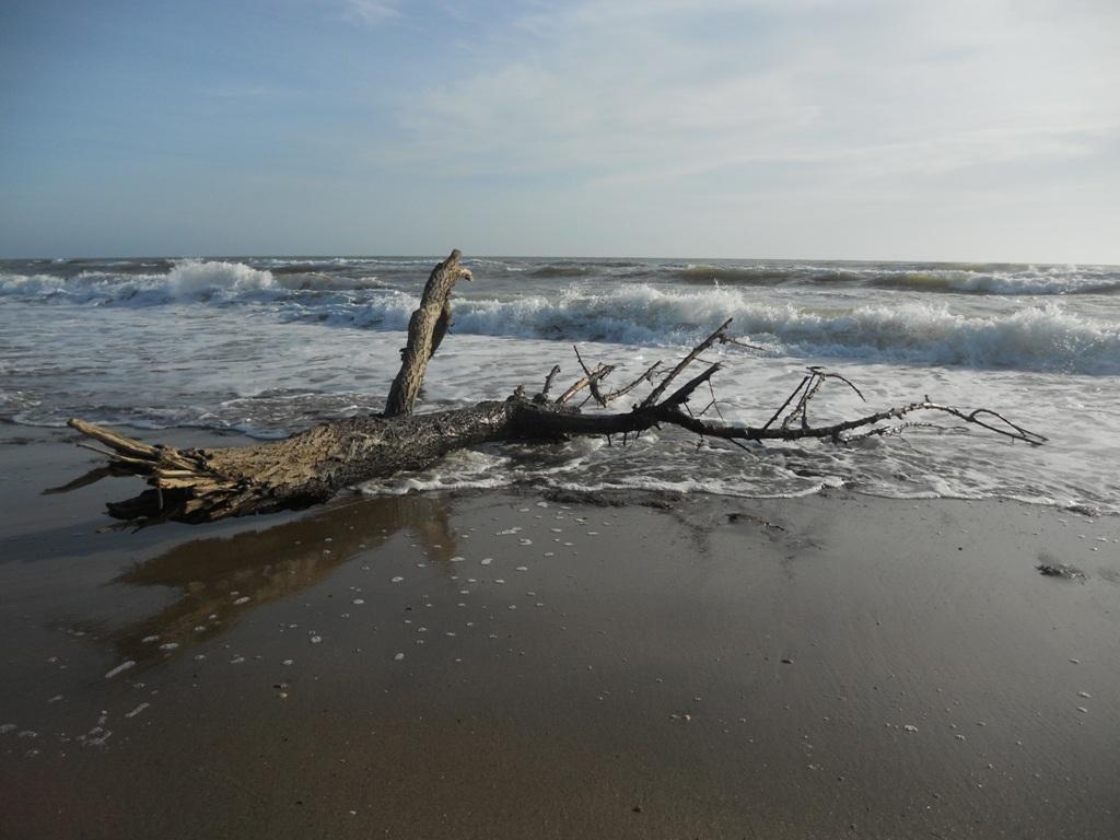 Pescara, recuperato un tronco in mare