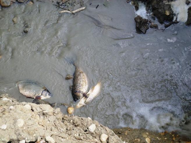 """Morro d'Oro, WWF: """"Moria di pesci nel laghetto"""""""