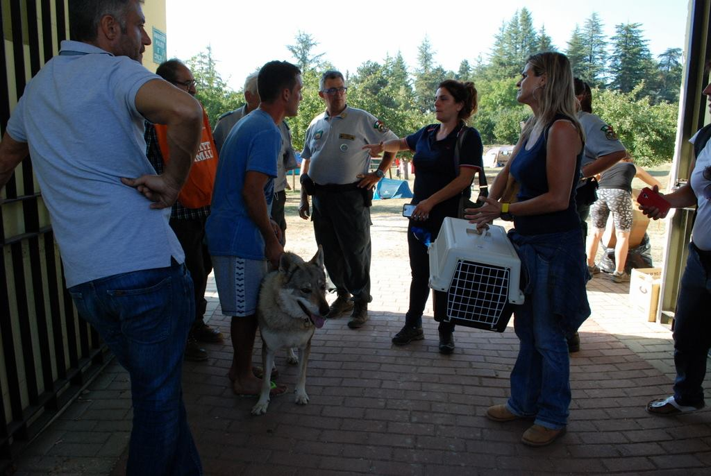 Terremoto: dal Dog Village di Montesilvano aiuto a …4 zampe