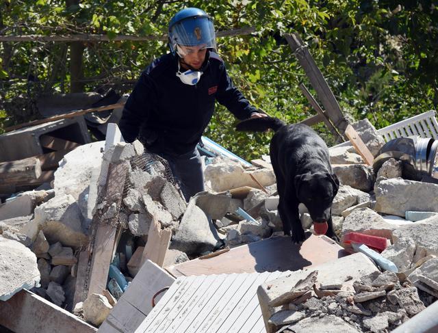 Terremoto, straordinario Leo il labrador che ha salvato Giorgia