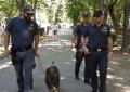 Unità cinofile della Gdf in azione ad Avezzano