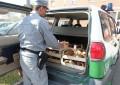 Monti Laga: raccoglieva funghi, sequestro e sanzione