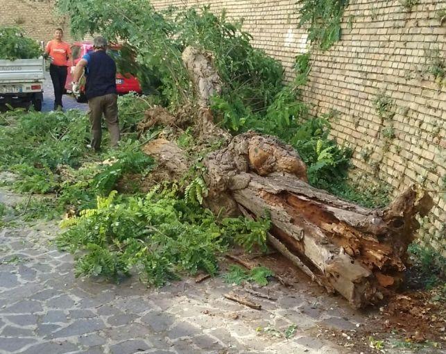 Chieti, albero caduto in Via della Liberazione