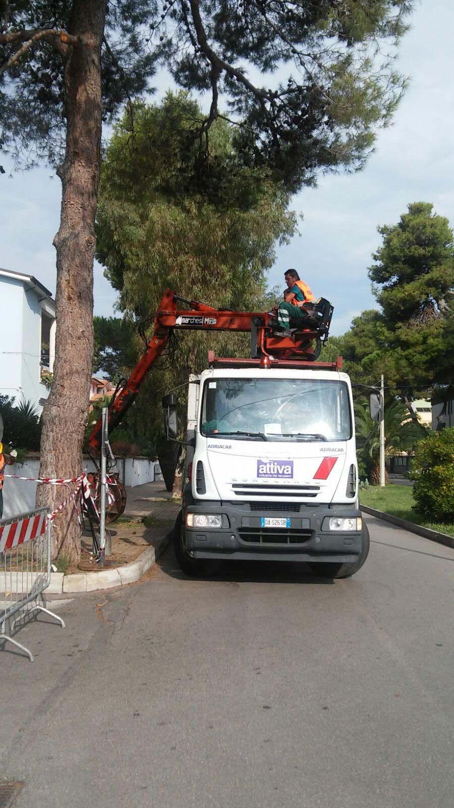 Taglio alberi a Pescara: Smaltimento a carico del Comune?