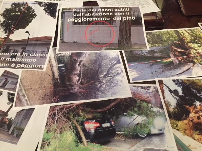 Pescara: Nessun albero sano abbattuto