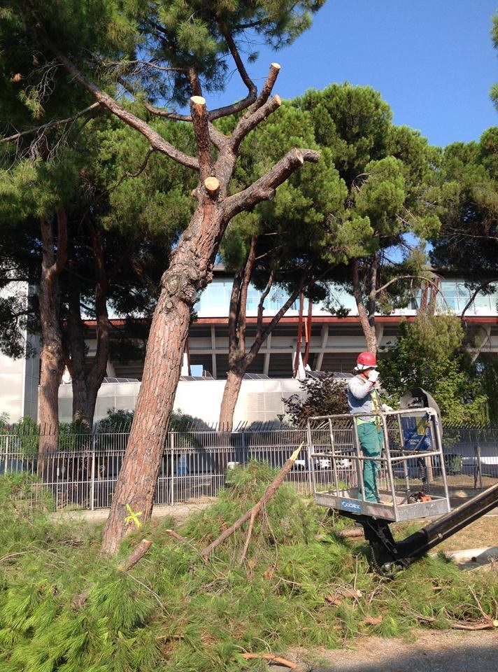 Taglio alberi Pescara: basta polemiche sulle professionalità