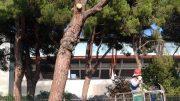 tagli-alberi1