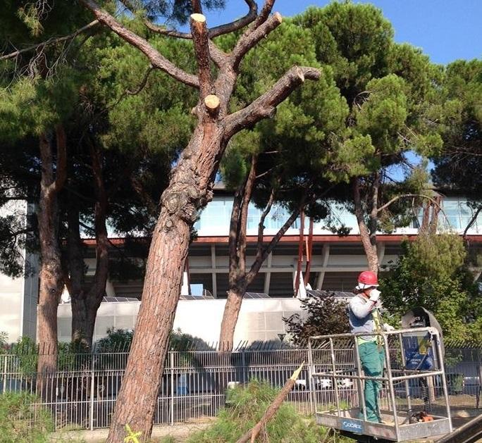 Pescara: taglio alberi, parla ordine Agronomi