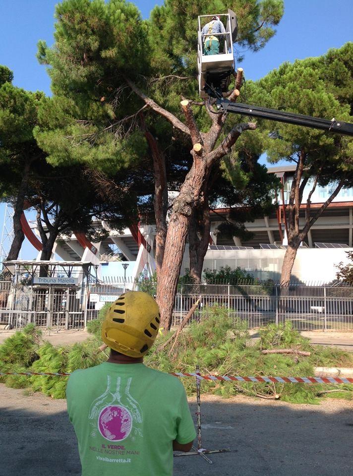 Pescara, il M5S contro il taglio degli alberi