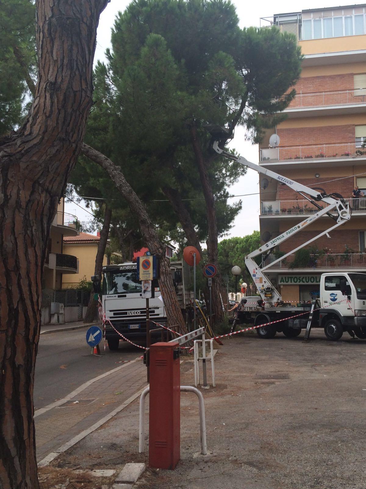 Alberi tagliati a Pescara colli, il parere dei residenti