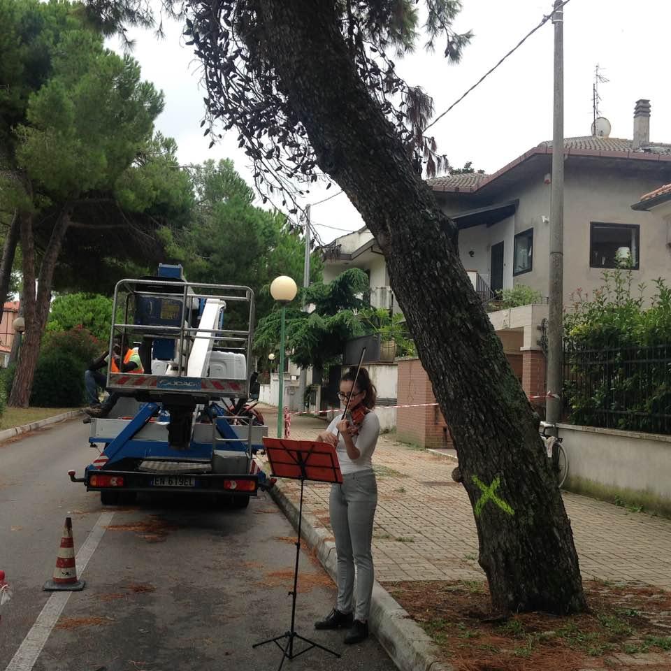 Alberi tagliati a Pescara, proteste e requiem