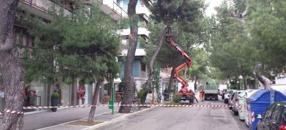 Taglio alberi Pescara, polemiche al sopralluogo