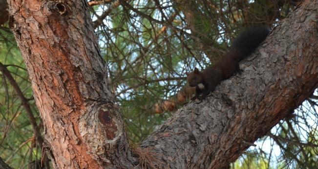 Alberi Pescara, ambientalisti postano foto scoiattolo
