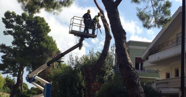 Pescara: cadono alberi, ma per via della pioggia