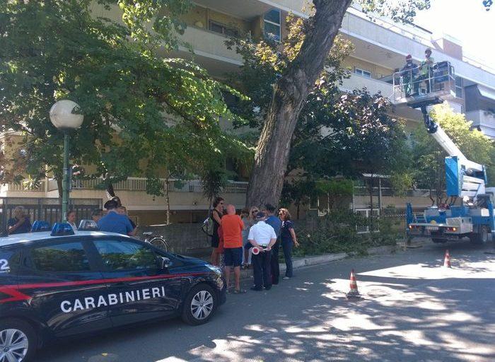 Taglio degli alberi a Pescara, esposto in Procura