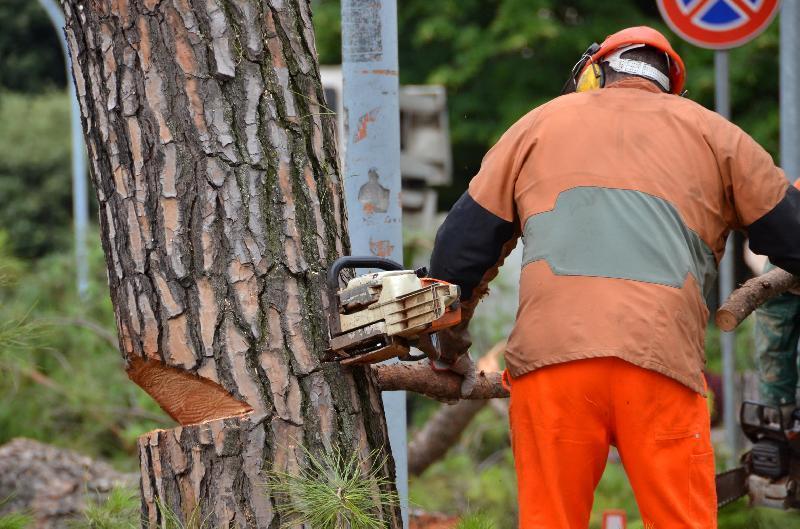 Taglio alberi a Pescara, interviene la Digos