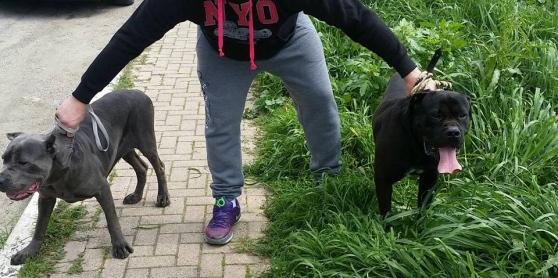 Bimbo muore azzannato dai cani a Cepagatti