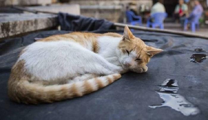Sulmona: gattino ucciso a bastonate, condannato