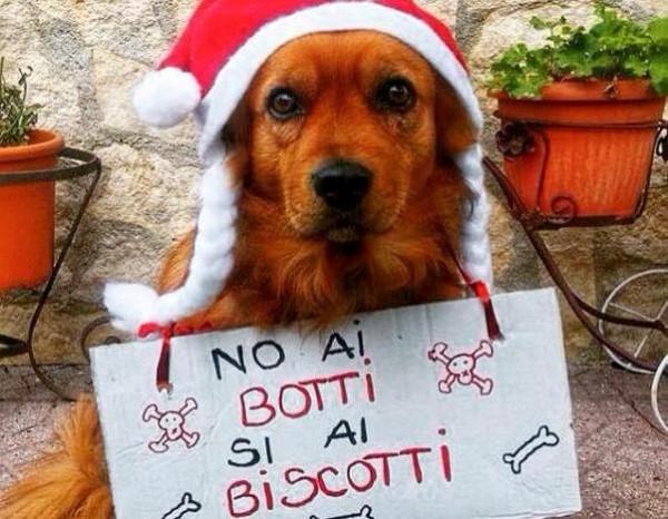Abruzzo, per gli animali botti al bando in tanti Comuni
