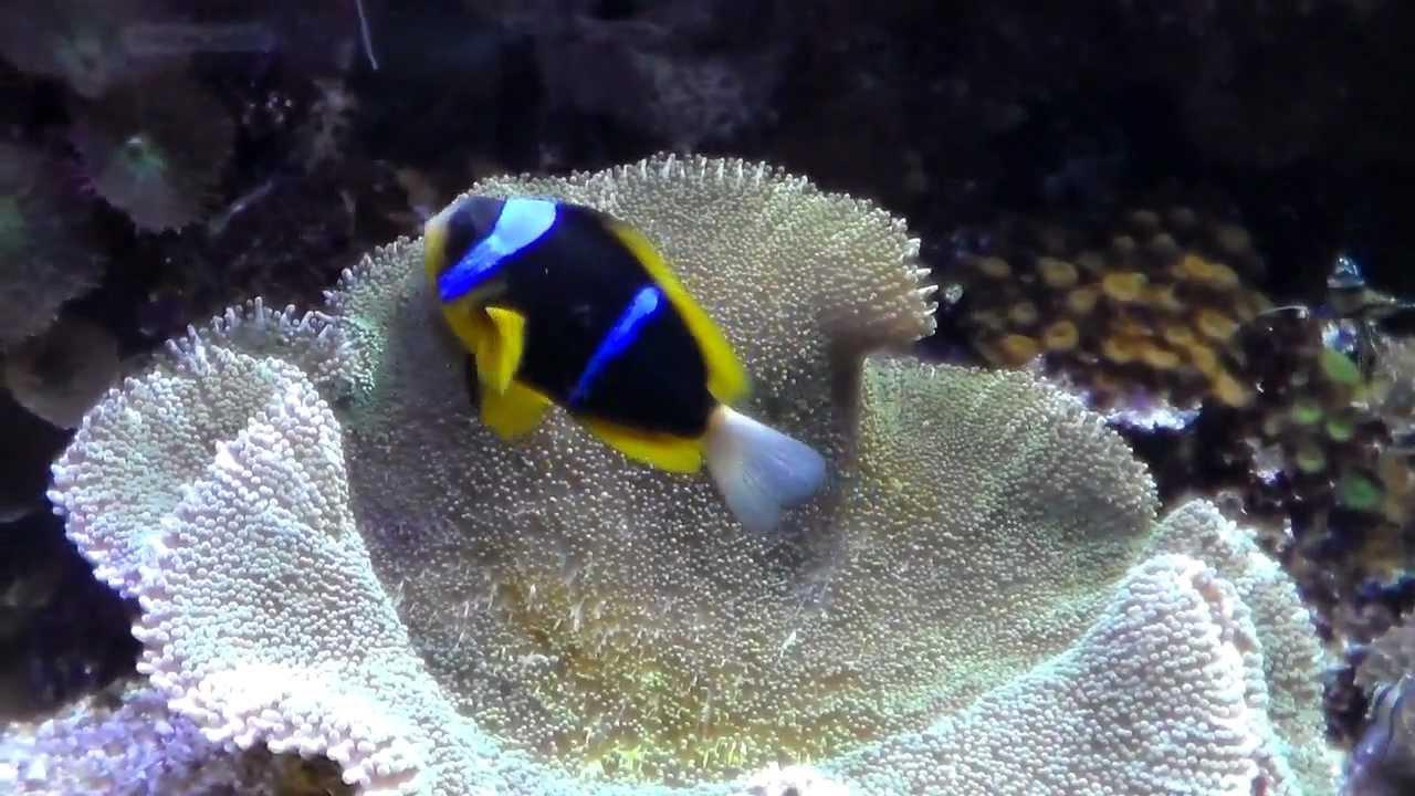 Due tonnellate di pesci tropicali e coralli vivi sequestrati