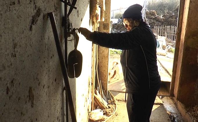 Cellino Attanasio: i vigili del fuoco salvano il bestiame
