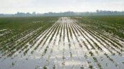 maltempo-agricoltura1
