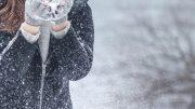 freddo11