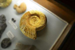 Museo ambre e fossili san valentino