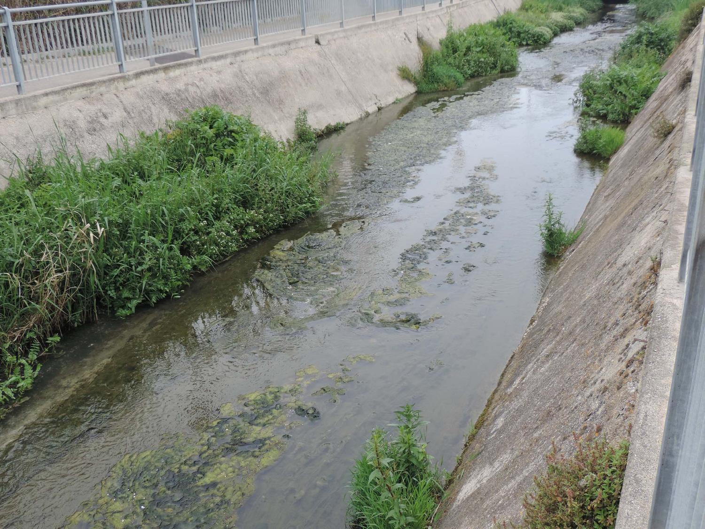 Fosso Vallelunga, l'Arta conferma la balneabilità delle acque