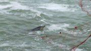 delfini-reti11