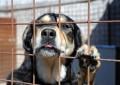 Ortona: cani sequestrati, proprietario minaccia di darsi fuoco