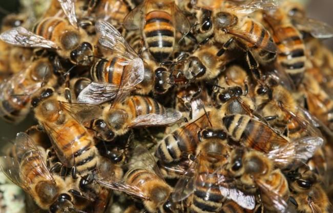 Roseto degli Abruzzi: diecimila api invadono la spiaggia