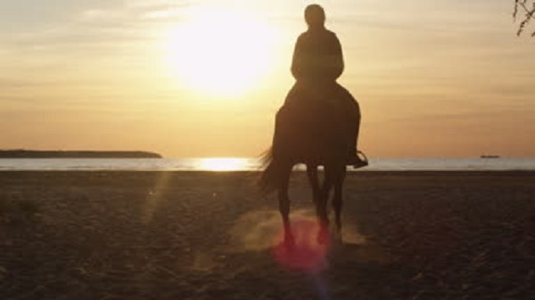 cavallo-spiaggia11