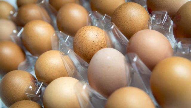 Uova al fipronil: in Abruzzo nessun caso