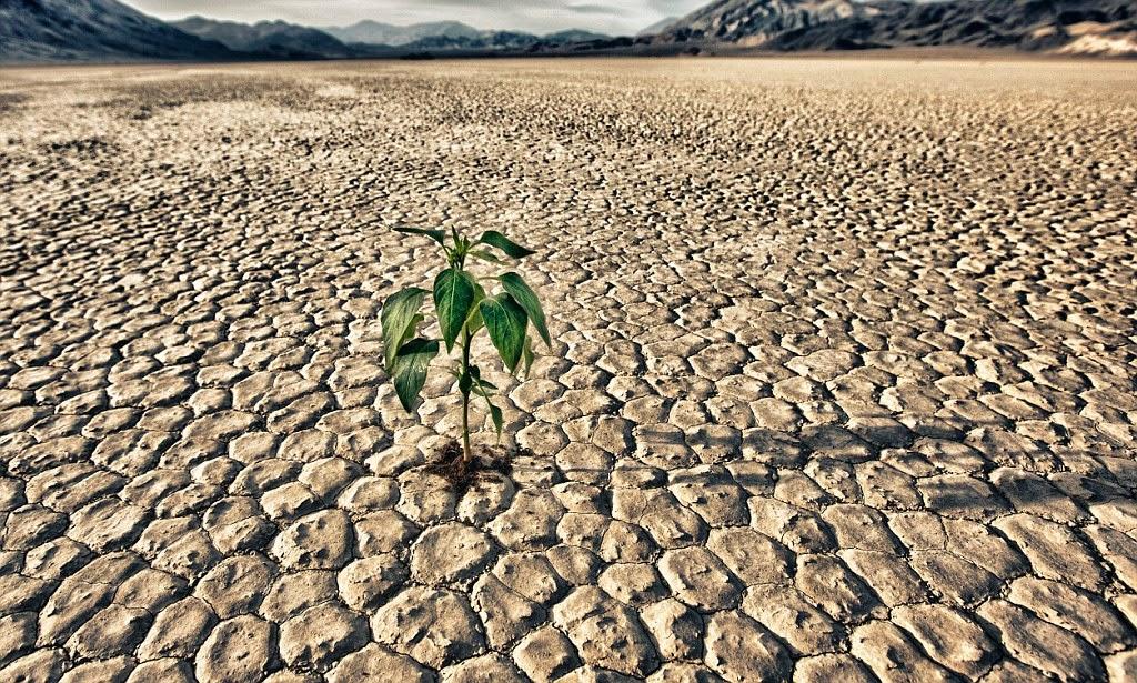 Cambiamenti climatici, seminario con Molteni