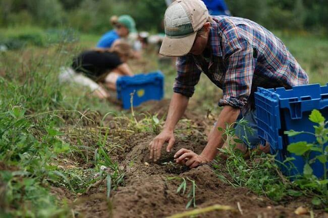 Agricoltura, in Abruzzo 10 mila operai senza rinnovo