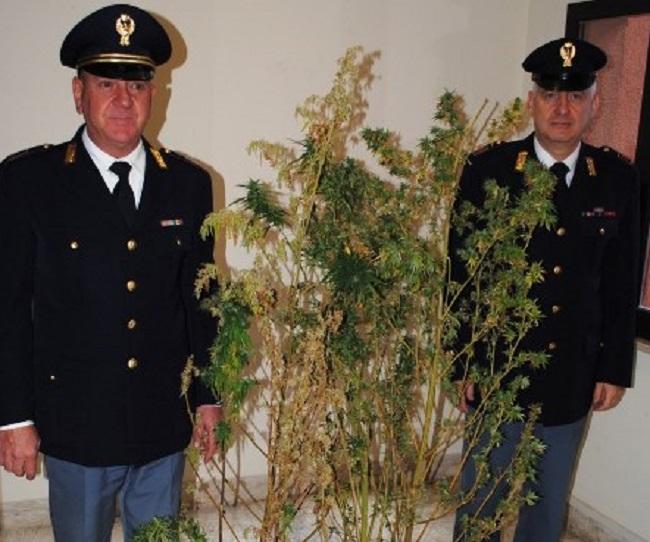 Atri: in casa piante marijuana alte un metro e 80, arrestato